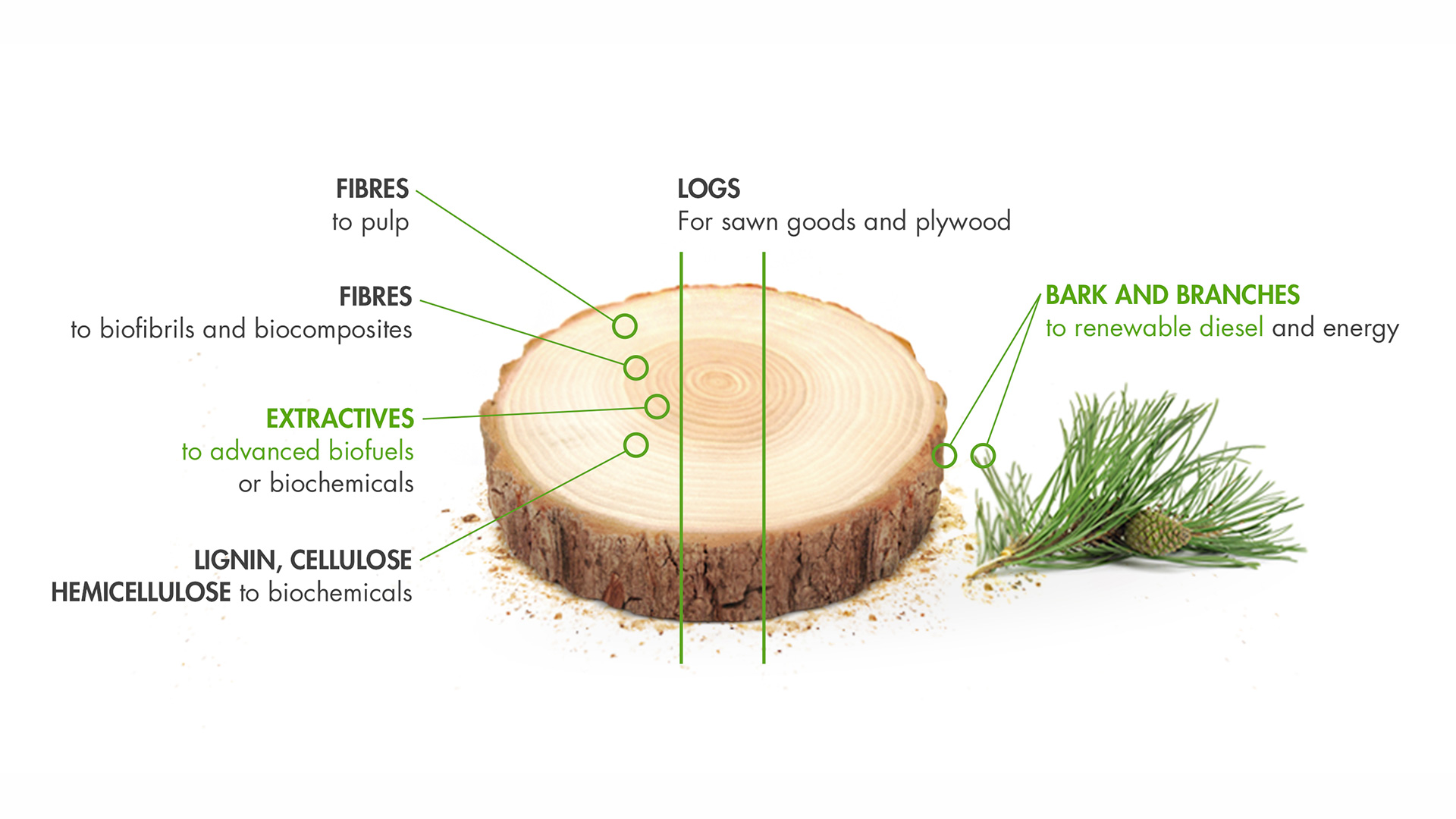 upm-biofuels-wood-raw-material-is-the-basis.jpg