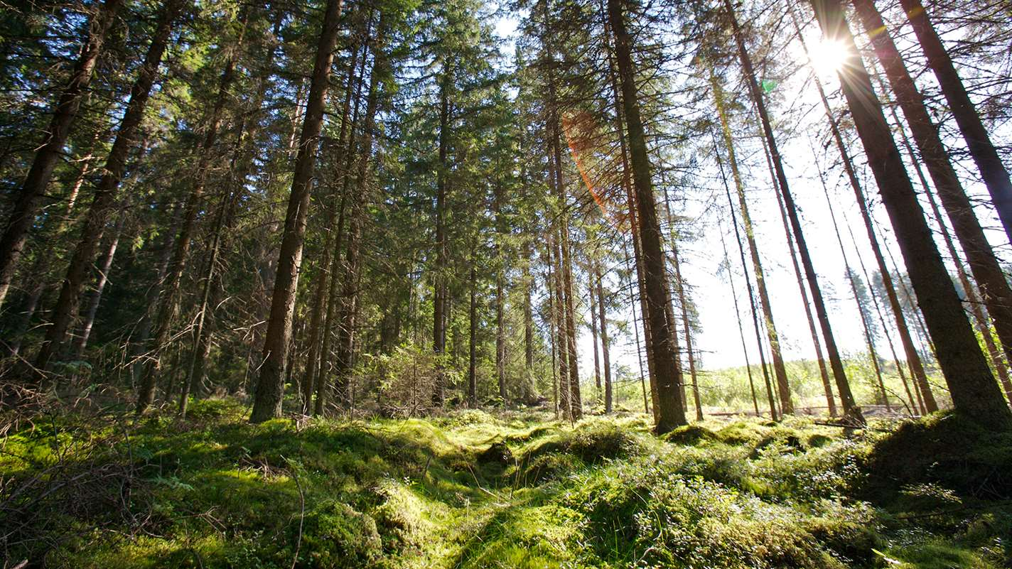 Finnish circular economy — wood turns to diesel and perfume